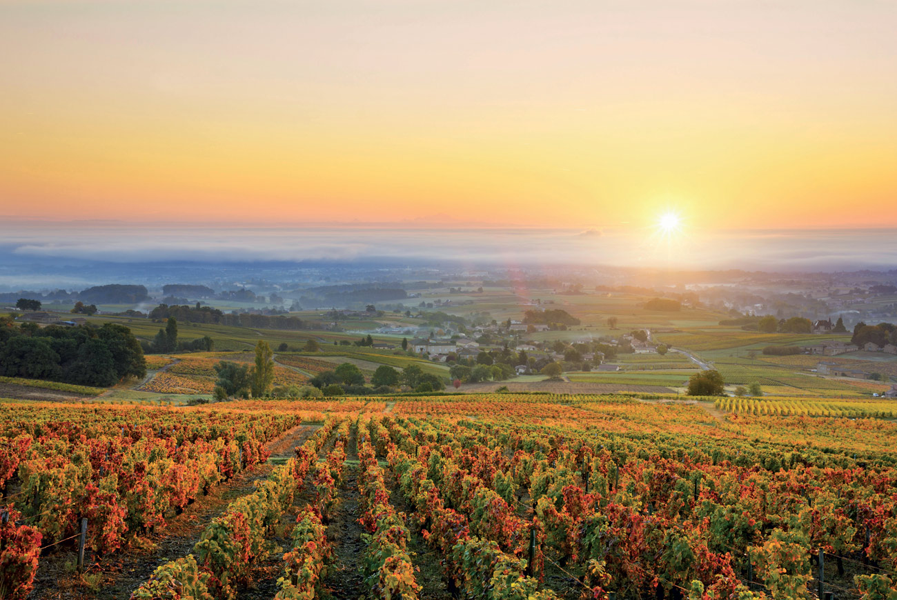 Climate change in Burgundy: Slowing the impact
