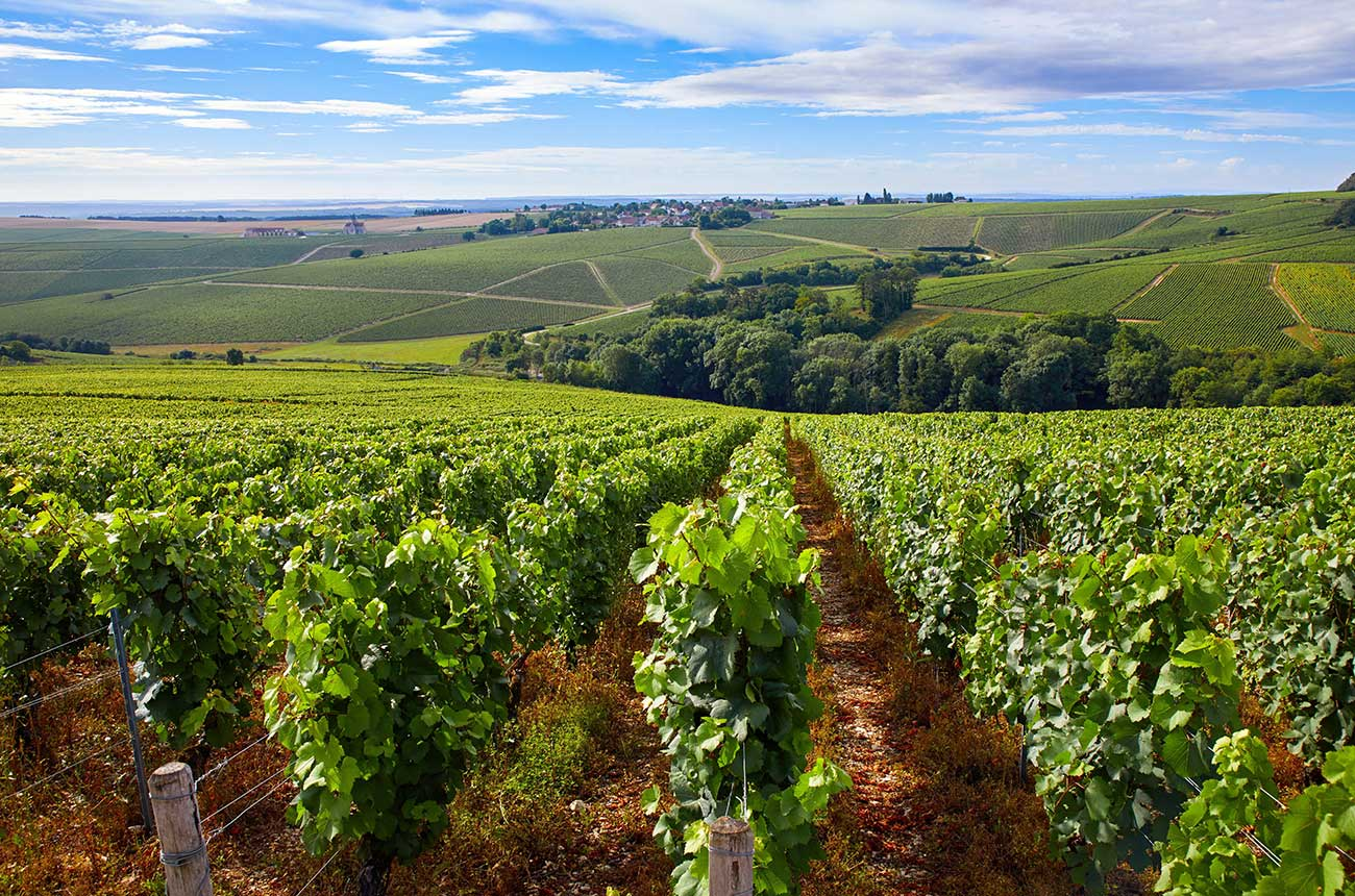 Is Chablis in Burgundy? Protesters say yes