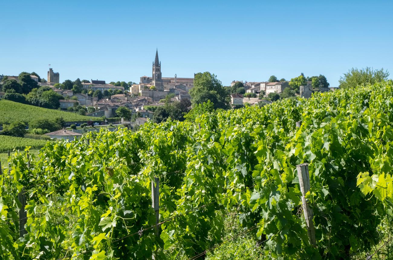 Best St Emilion 2019 wines tasted en primeur