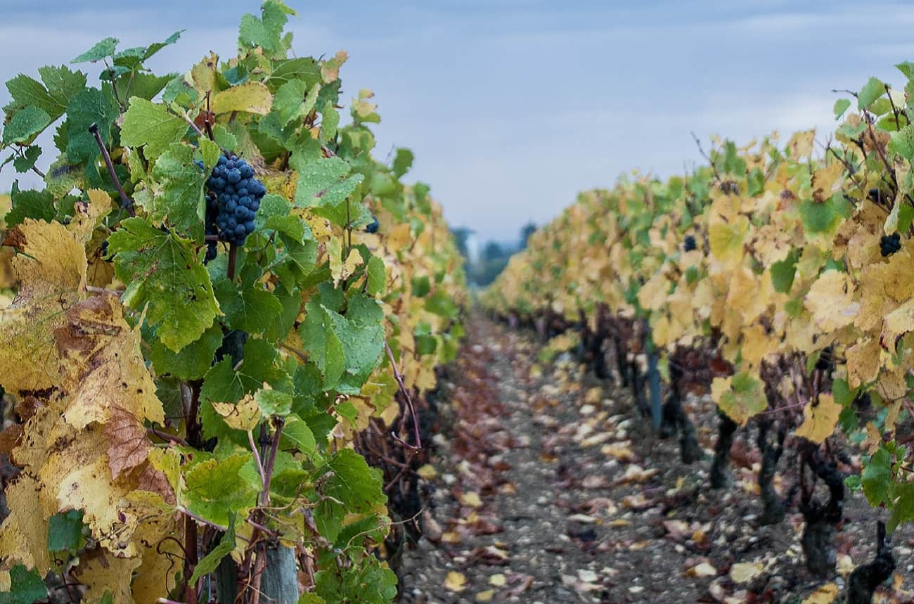 How much does a French vineyard cost?
