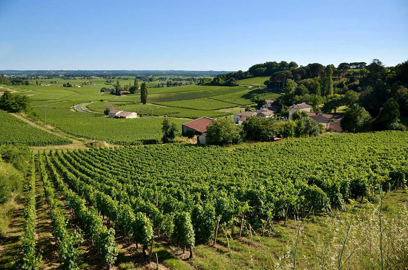 St-Emilion Château Puy-Blanquet sold to La Gaffelière owner