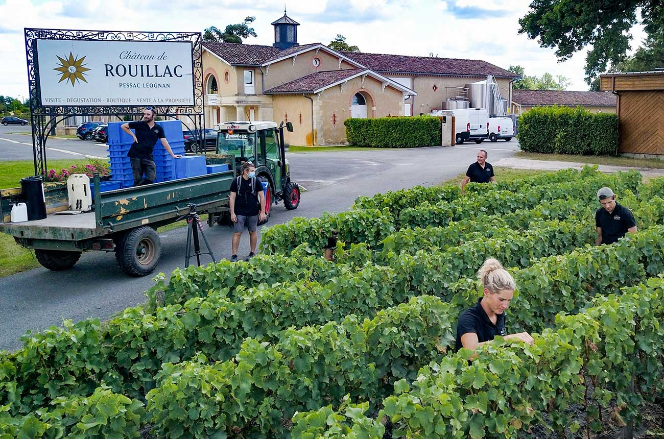 Bordeaux 2020 white wine harvest starts early