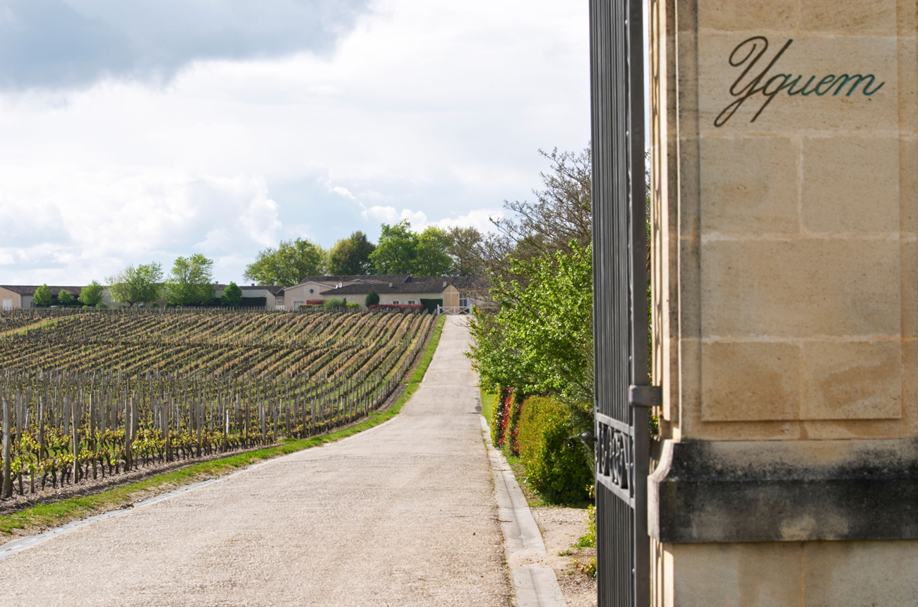 Assessing the September releases plus final 21 wines tasted including Y d'Yquem