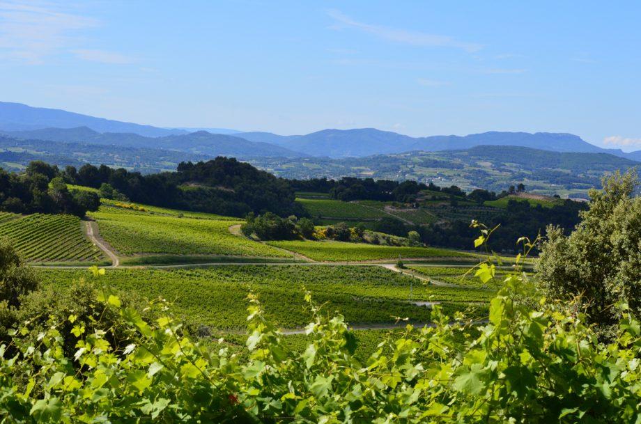 New Côtes du Rhône Villages appellation granted – Nyons