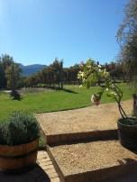 Uva Mira Vineyards Steps