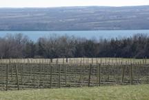 View of Cayuga Lake at Long Point Winery