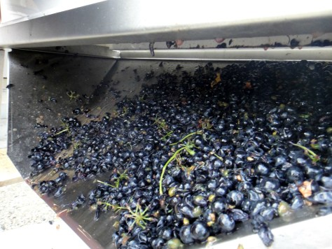 The paddles break it all up and send the grapes out the bottom and into bins for fermentation.