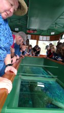 Barb Peering Into the Glass Bottom Boat