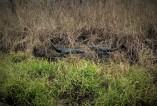 2 Gators 2018 02 03
