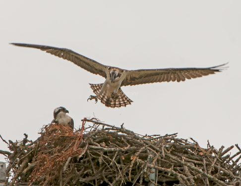 Practice landing