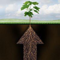 ¿Qué te falta para desarrollar tu propio potencial profesional?