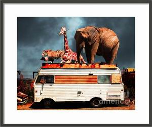 transportation,vehicle,vehicles,trailer,trailers,trailer park,rv,recreational vehicle,camping,trash,redneck,barnum and bailey,ringling brothers,circus,satire,nostalgia,nostalgic,elephant,elephants,old,jalopy,retro,kitsch,kitschy,whimsical,whimsy,surreal,surrealism,fantasy,fun,funny,happy,humor,humorous,color,colorful,vacation,route 66,road trip,roadtrip,usa,america,americana,zoo,animal,backroad,backroads,tiger,cat,giraffe,giraffes,pig,chicken,rooster,contemporary,modern,wing tong,wingsdomain
