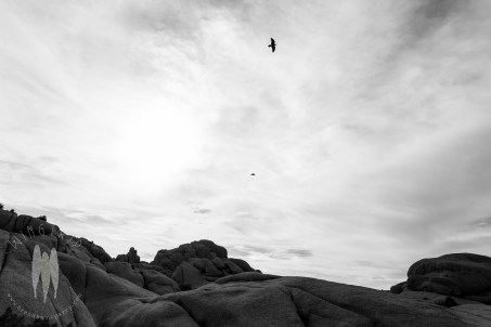 Ravens soaring over waved rocks during my first trip to Joshua Tree National Park.