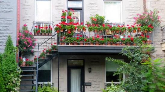 Flower Pots Le Plateau, Montreal