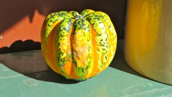 Multi-coloured pumpkin, Quebec