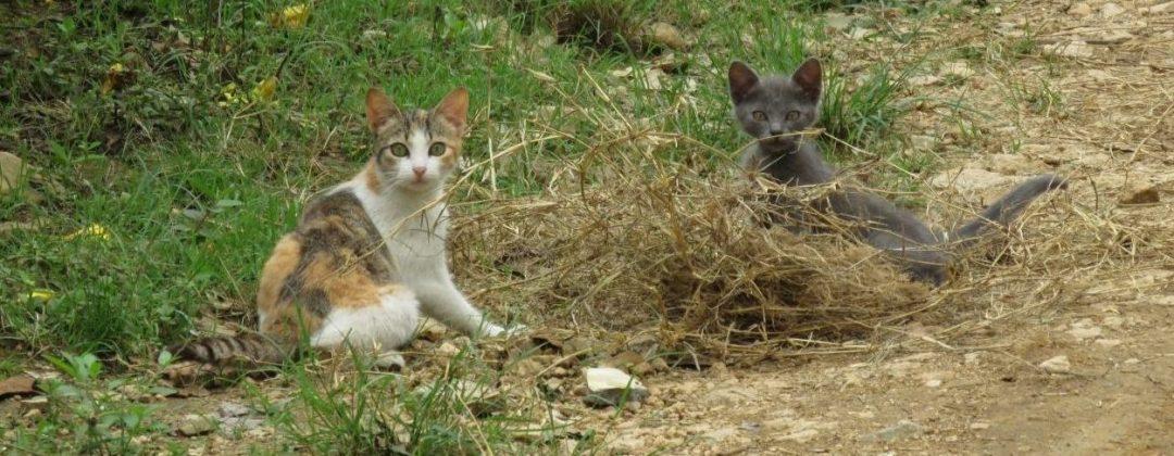 Dos Gatos Locos
