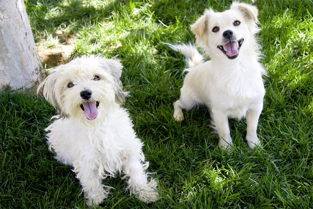 Monica and Chandler were rescued from the streets of East Los Angeles thanks to Rescue from the Hart.