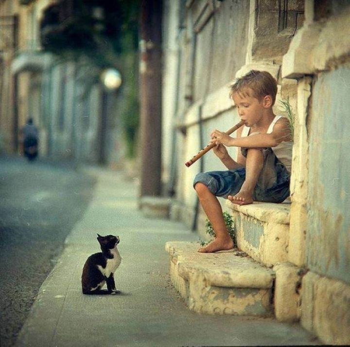 29 Powerful Pictures - A little boy playing his flute entertains a cat.