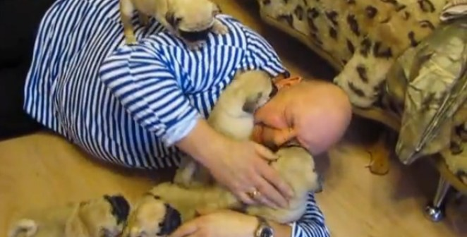Russian Man Getting Swarmed With Baby Pugs is Adorable!