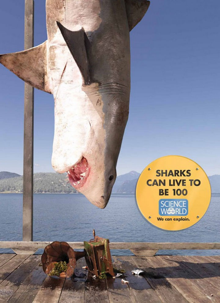 20 Billboards with Science Facts - Sharks can live to be 100.