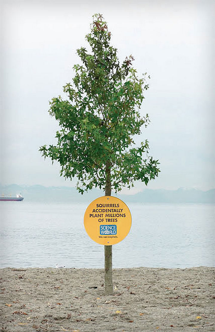 20 Billboards with Science Facts - Squirrels accidentally plant millions of trees.