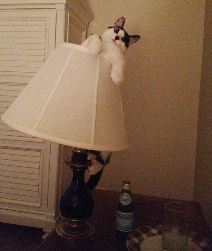 """30 Funny Cat Pictures - """"Help, I am holding on for dear life here."""""""