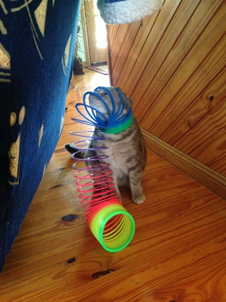 """30 Funny Cat Pictures - """"Hmm, I've really done it now..."""""""