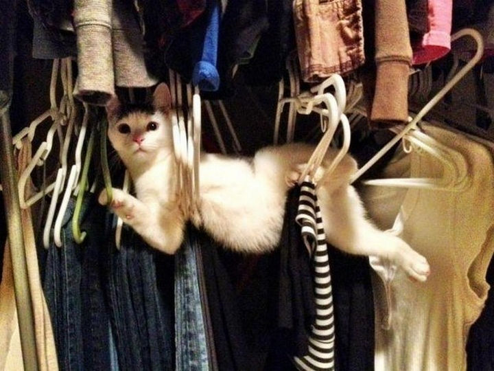 """30 Funny Cat Pictures - """"What, you've never seen a cat trapped in clothes hangers before?"""""""