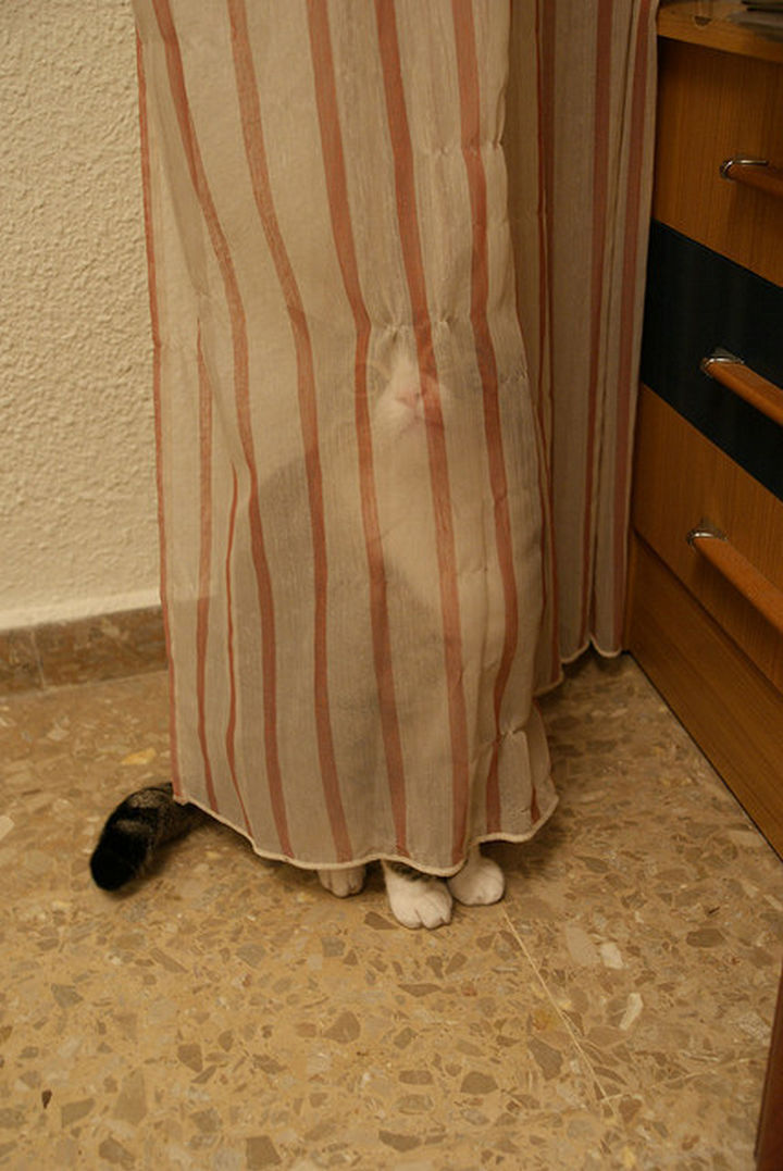 """30 Funny Cat Pictures - """"Ha ha ha, they'll never find me here."""""""