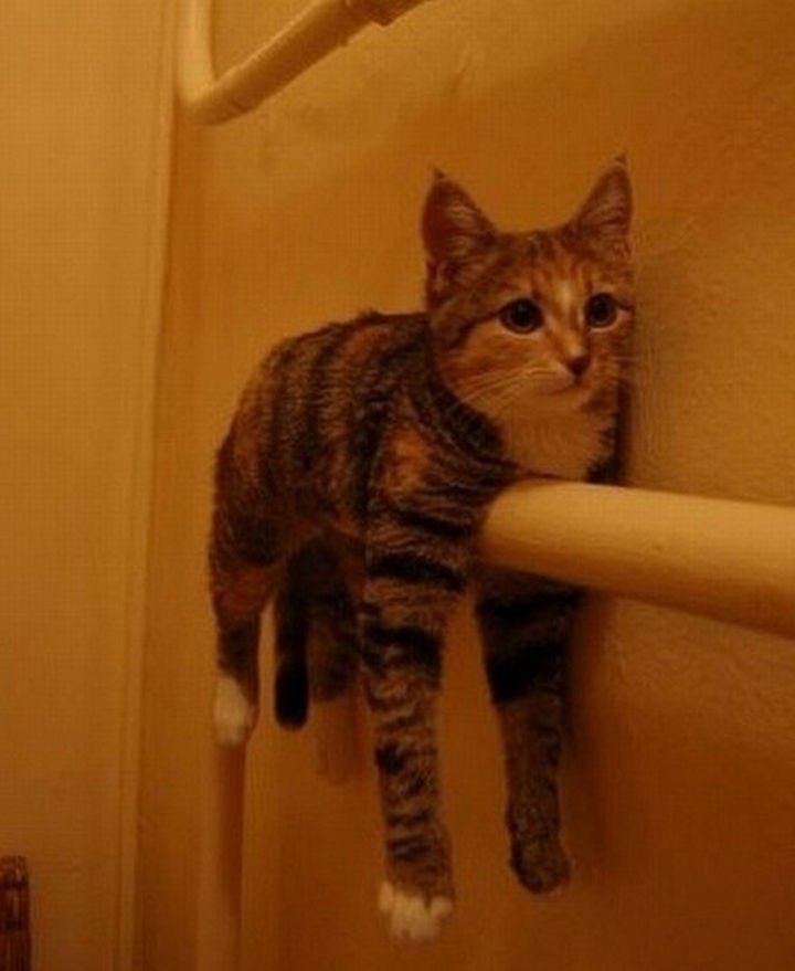 """30 Funny Cat Pictures - """"This LOOKED like a good idea. But now, not so much."""""""