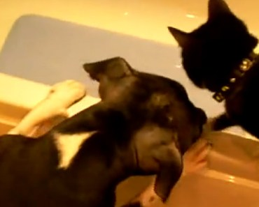 Dog Wants the Toy so He Pushes the Cat into the Tub to Get It.