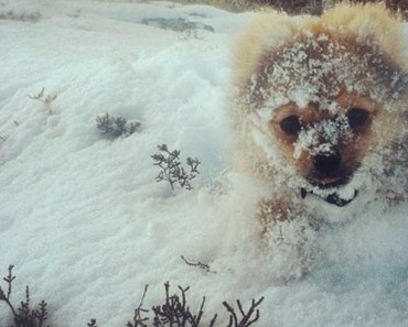 18 animals that look adorable playing in the snow.