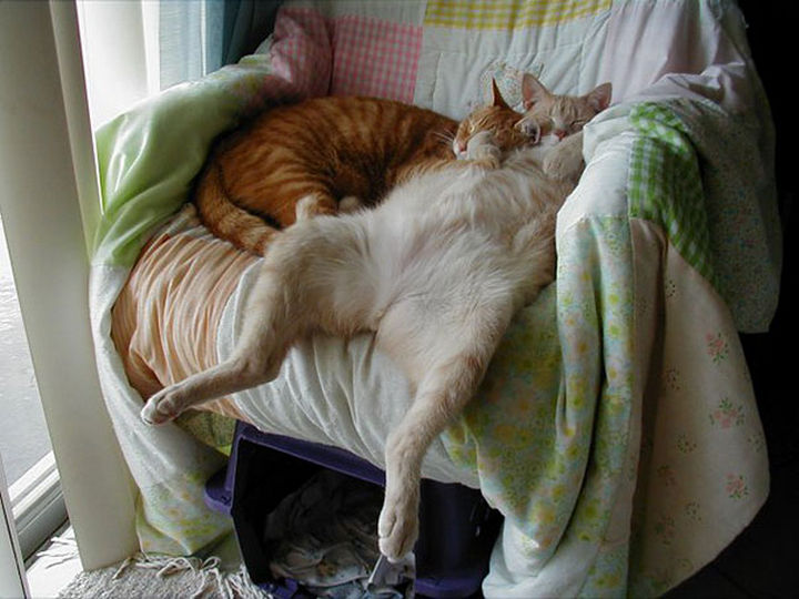 24 Cats Asleep in a State of Bliss - Napping like a boss.