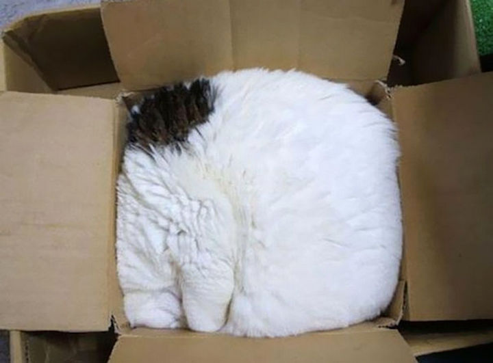 24 Cats Asleep in a State of Bliss - Cat in a box.
