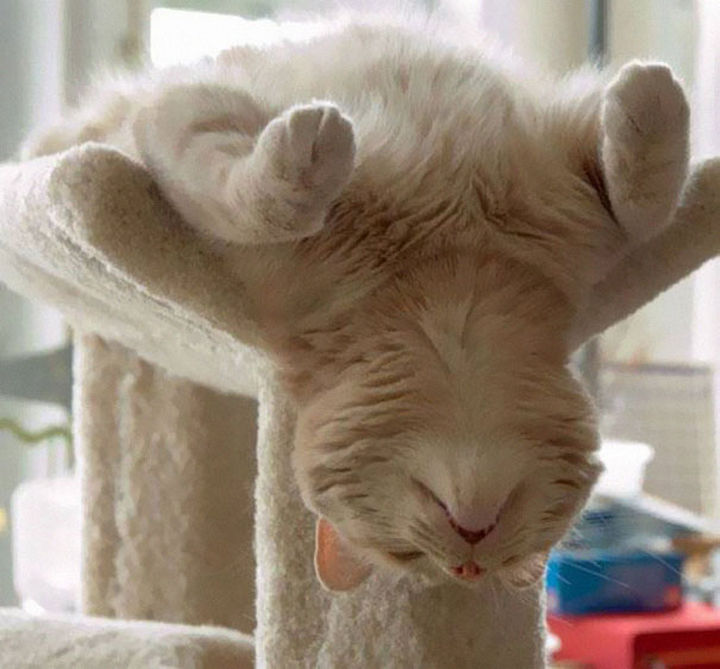 24 Cats Asleep in a State of Bliss - He is down for the count.