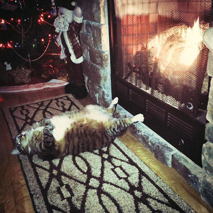 24 Cats Asleep in a State of Bliss - Kitty warming her feet by the fire.