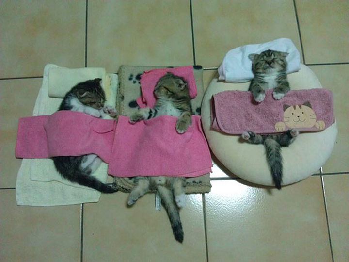 24 Cats Asleep in a State of Bliss - Cuteness. Overload.