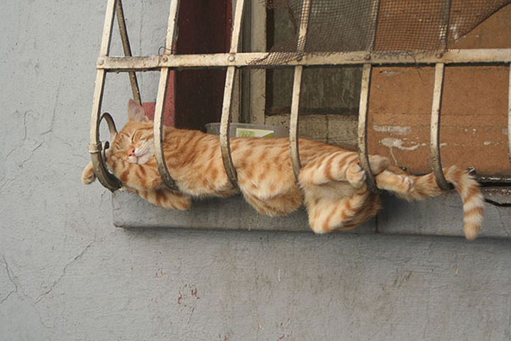 24 Cats Asleep in a State of Bliss - He must have needed some airtime.