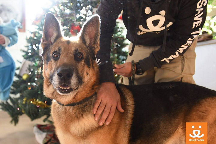 Christmas wishes do come true and it certainly did for Bela. He now can continue having a great life and give joy to so many others.
