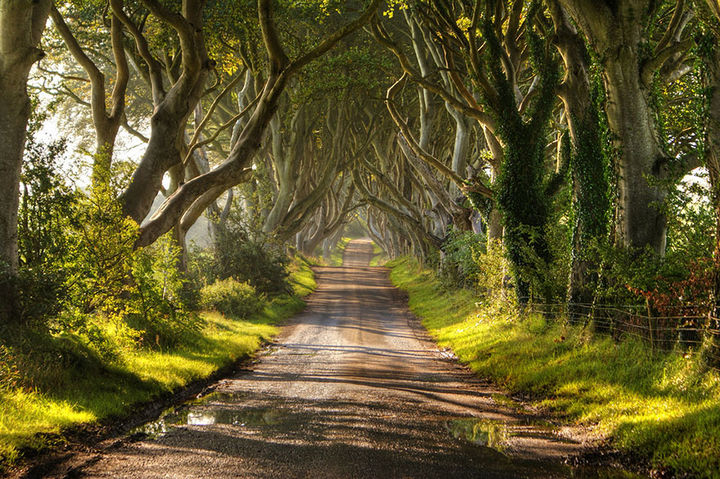 17 Pictures of the Prettiest Trees on Earth - The Dark Hedges In Northern Ireland (Daylight).