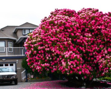 17 of the Prettiest Trees on Earth.