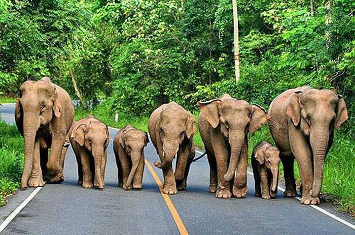 20 Beautiful Images Showing an Animal's Unconditional Love - Elephant herd.