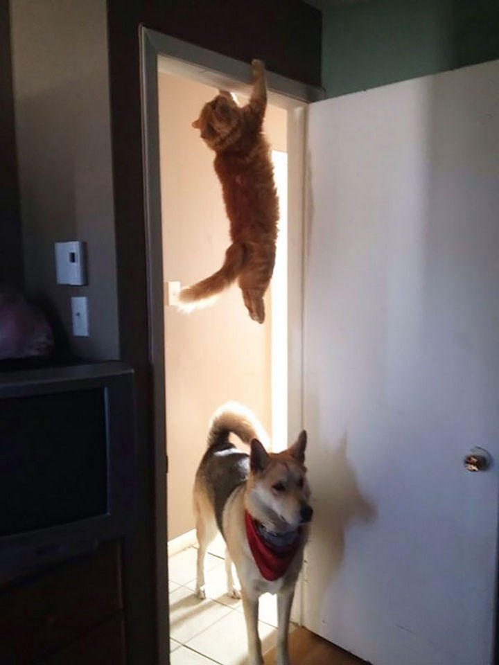 27 Stealthy Ninja Cats - This dog has no idea of the impeding danger he will soon face.