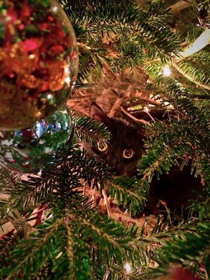 27 Stealthy Ninja Cats - A Christmas tree always creates a good cover.