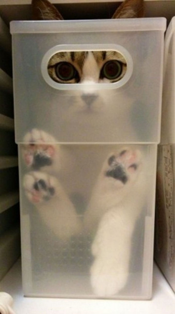 27 Stealthy Ninja Cats - Busted!!
