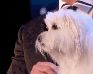 Marc Métral Introduces His Talking Dog on Britain's Got Talent.