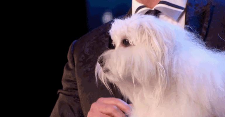 Marc Métral Introduces His Talking Dog on Britain's Got Talent.