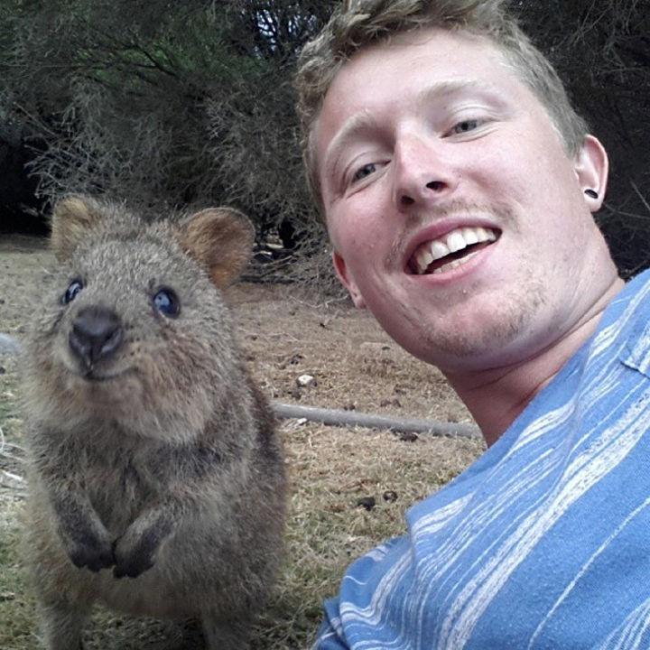 Quokka Selfie Trend - Image 4.