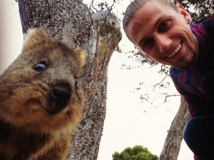 Quokka Selfie Trend - Image 10.