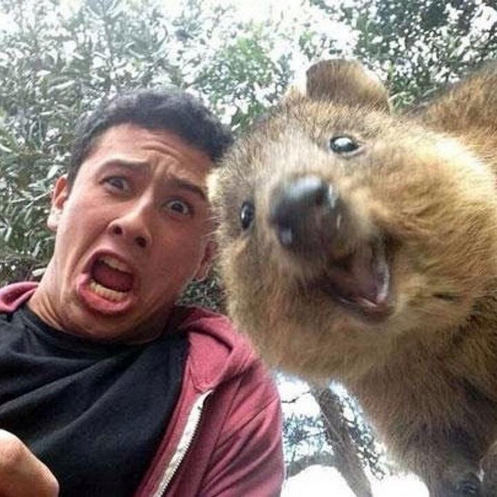 Quokka Selfie Trend - Image 13.